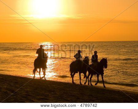 Strolls To Horse