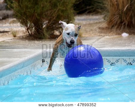 Dog getting ready to jump on her ball