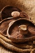 stock photo of portobello mushroom  - still life of three portobello mushrooms in a rustic setting - JPG