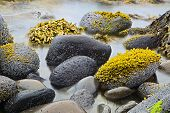 green algae or seaweed on boulders at rocky shore of wild coastline nature detail coast landscape ba