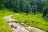 stock photo of serbia  - Mountain road after rain - JPG