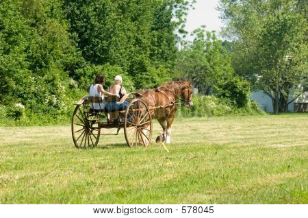 A Couple Driving Their Horse