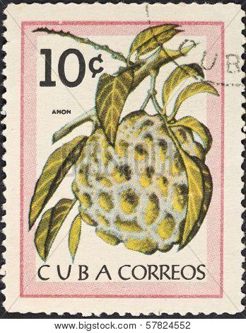 Tropical Fruit - Anon (sugar-apple)