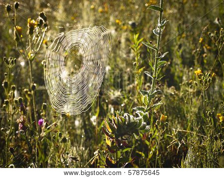 Plants With Spider Web