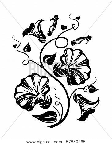 Bindweed black silhouette. Vector illustration.