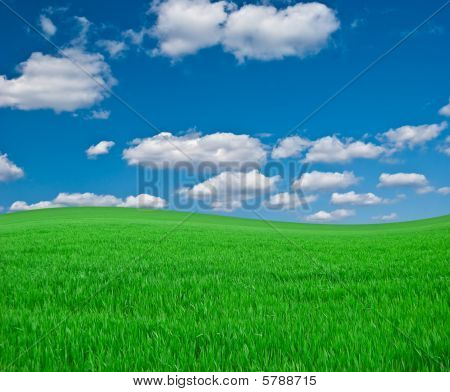Meadow With A Green Young Grass And The Dark Blue Sky With Clouds