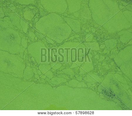 Closeup Duckweed On Water Surface,  Nature Texture Concept