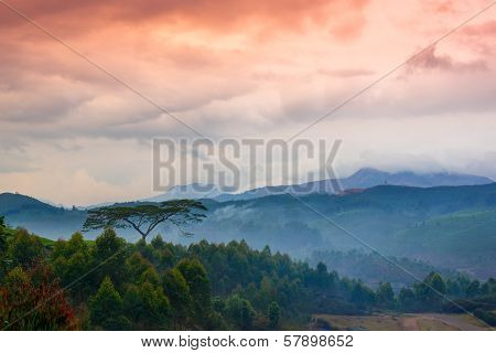 Beautiful Landscape With A Tree And Mountains In A Pre-dawn Haze