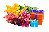 colorful  tulips and gift boxes
