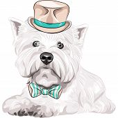 image of west highland white terrier  - color sketch closeup portrait serious dog West Highland White Terrier breed in a beige silk hat and bow tie - JPG