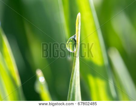 The Dewdrop On Green Grass In The Sunshine
