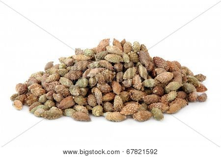 Xanthium fruit used in chinese herbal medicine over white background. Cang er zi.