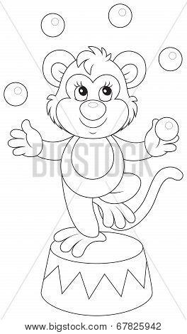 Circus monkey