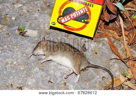 Deat rat and rat poison.