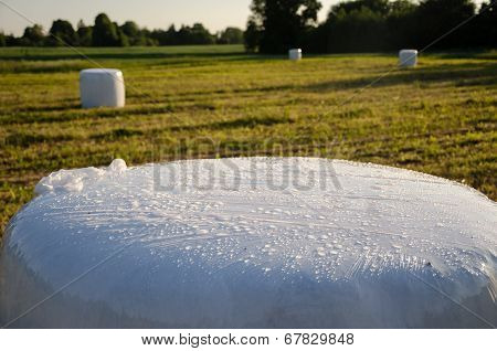 Polythene Wrapped Grass Bales. Animal Fodder