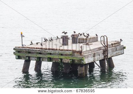 Seabirds On An Old Concrete Pier