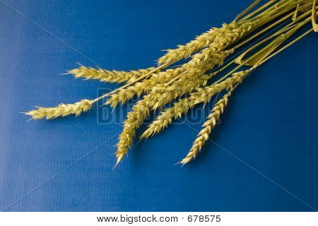 Ripe Wheat On Blue Background