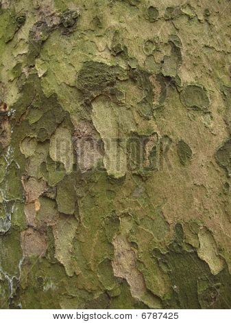 Abstract Green And Brown Background