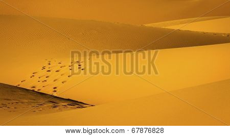 Sandy waves in the Sahara Desert at sunset. Background for your design.