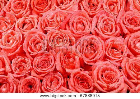 Orang Rose Pattern
