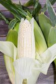picture of corn stalk  - Vertical view of white sweet corn peeled back from stalk with wholel corn in background on top of rustic wood - JPG