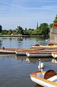 image of avon  - Rowing boat and swans on the River Avon Stratford - JPG