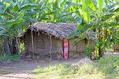 stock photo of mud-hut  - A poor mud hut in a forest of banana trees - JPG
