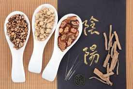 stock photo of taoism  - Chinese herbal medicine with acupuncture needles with yin and yang calligraphy script and I ching coin - JPG