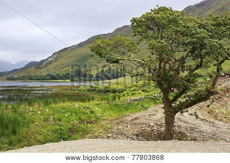 Beautiful National park Connemara