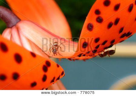 Ants Hide - n - Seek