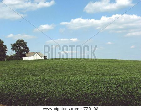 White farm in field