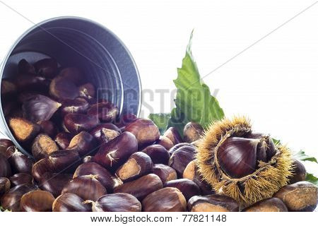 Chestnuts In A Bucket Isolated On A White Background