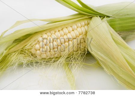 Ear Of Corn Partially Shucked