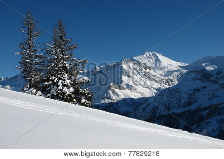 Wildhorn And Spruces