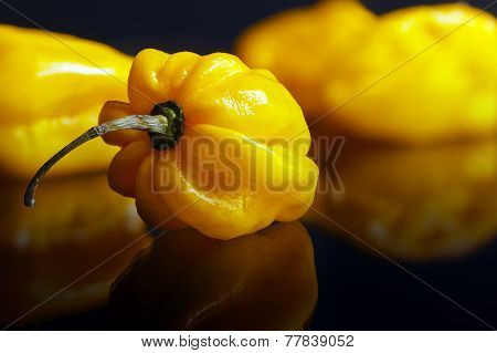 Yellow Habanero Pepper