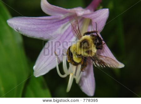 Flower with Honeybee