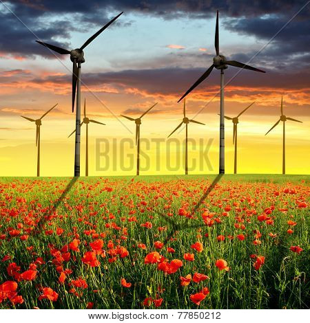 Spring landscape with red poppy field and wind turbines in the sunset