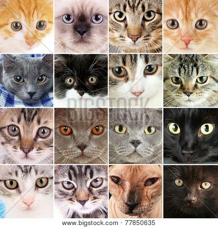 Cute cat faces collage