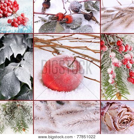 Collage of frozen plants on snow, close up