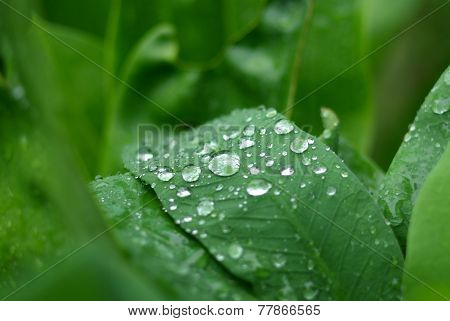 water drop on leaf  background