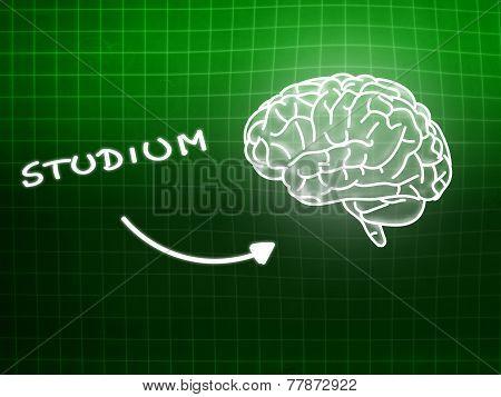 Studium Brain Background Knowledge Science Blackboard Green