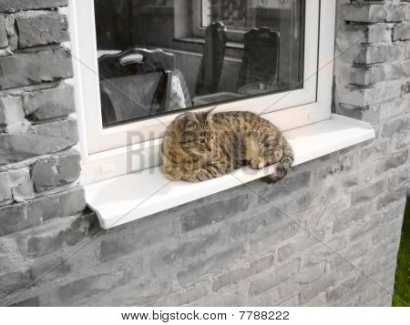 Cat Relaxing By Window