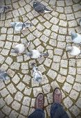 foto of street-walker  - Concept picture of human feet and pigeons - JPG