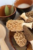 stock photo of morel mushroom  - Fresh spring morel mushrooms on a plate - JPG