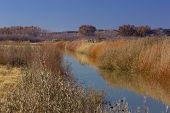 stock photo of apache  - Good active strategies of water and land management bring autumn color and splendor to Bosque del Apache National Wildlife Refuge in New Mexico - JPG
