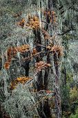 image of epiphyte  - Epiphytes in autumnal colors - JPG
