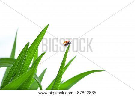 Ladybug on Leaf Flies Up