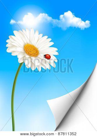 Nature summer background with daisy flower with ladybug.