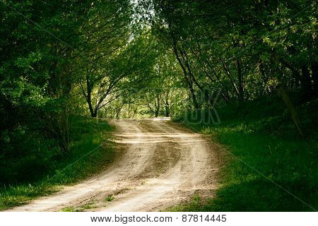ground road in summer forest
