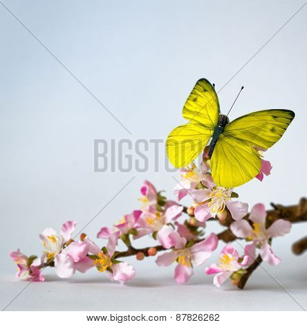 Light Colored Butterfly on Lovely Cymbidium Orchid Flowers on a Stem, Emphasizing Copy Space. Isolated on a White Background.